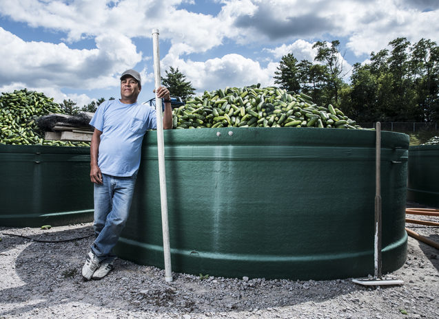 A worker stands beside a large vat of cucumbers outside at a pickle processing plant